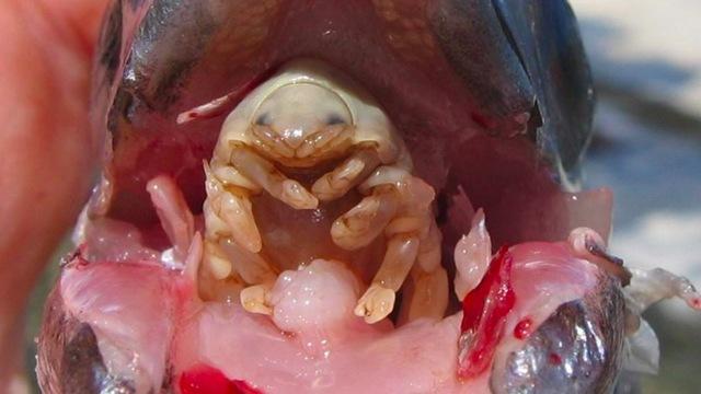 Le médicament sûr contre les parasites
