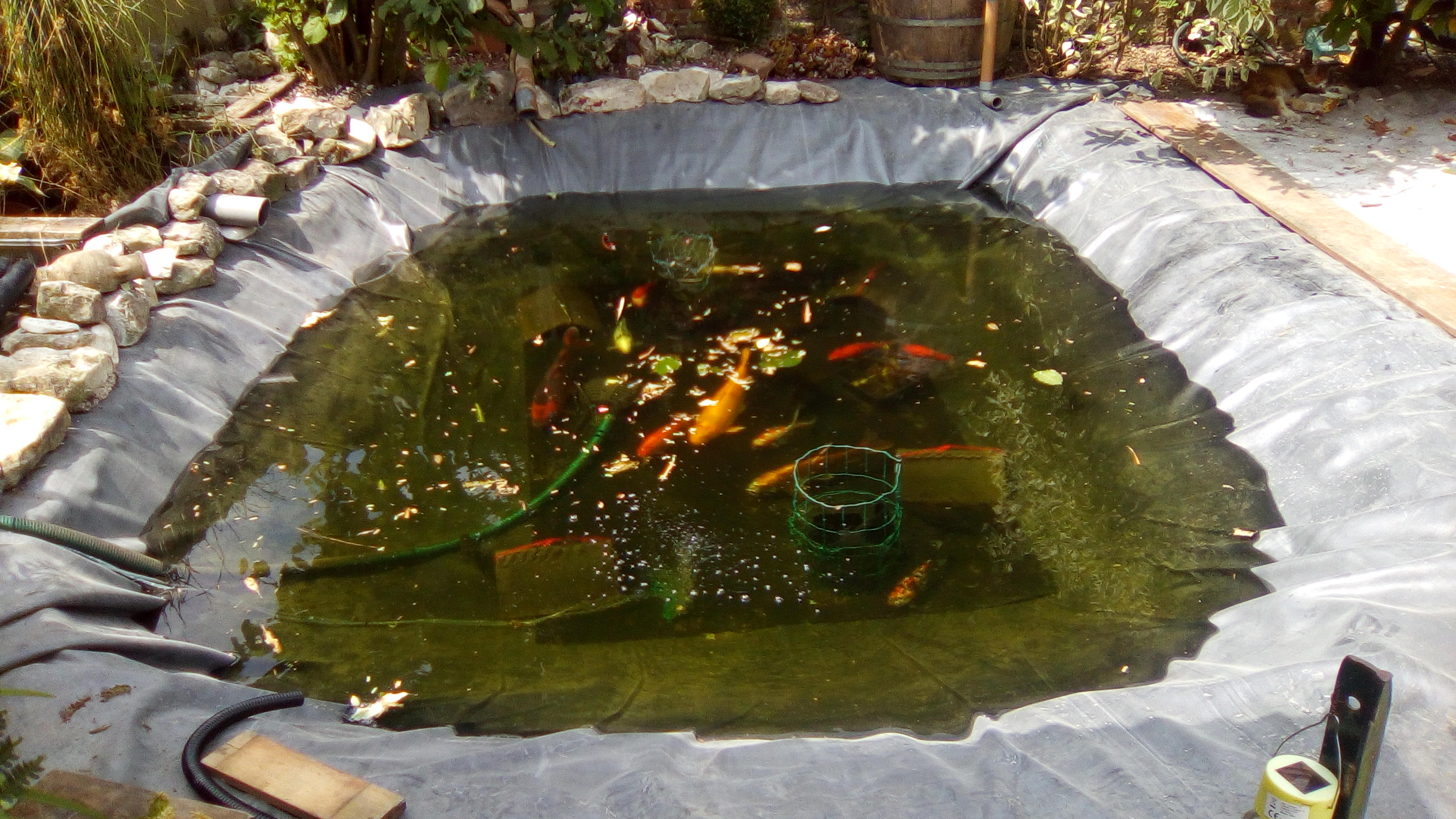 Poisson Rouge Bassin Extérieur restauration bassin - forum aquajardin - bassin koï, mare, étang